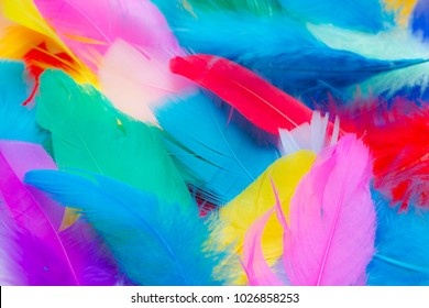 Close up to bright colorful feathers background
