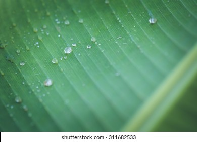 Close up of bright green leaf and water drop
