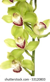 Close up bright green orchid