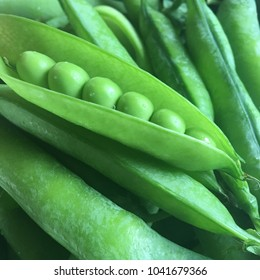 Close up of bright green and organic peas in pea pods picked fresh at the farm