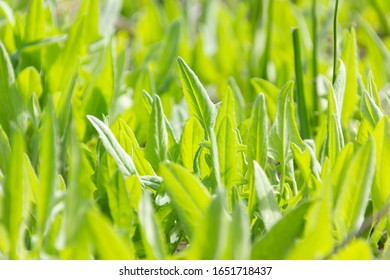 close up of bright sunlit green grass
