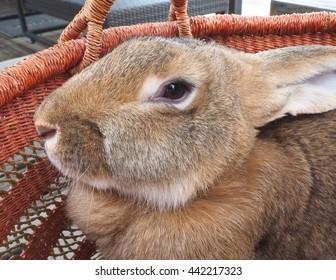 Doe Rabbit Images Stock Photos Vectors Shutterstock