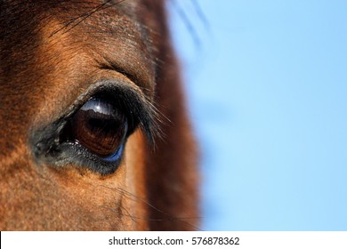 Close up of brown horse eye on sunny day
