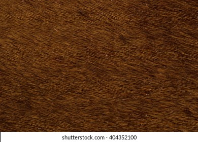 Close up brown horse textured