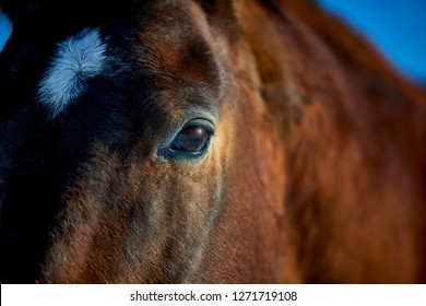 Close up of a brown horse's eye and face with shallow depth of field