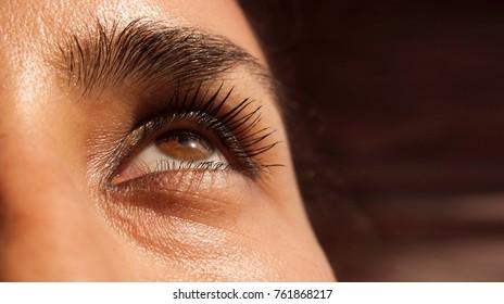 Close up brown human eye