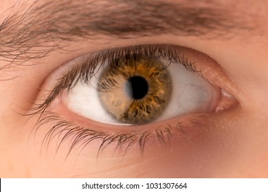 Close up of brown human eye with white reflection