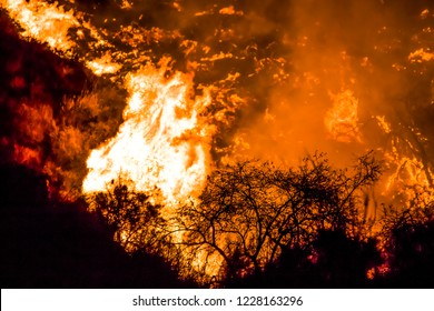 Close Up Brush in Silhouette with Flames Behind on California Hi