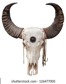 Close up of a Buffalo skull isolated on white background