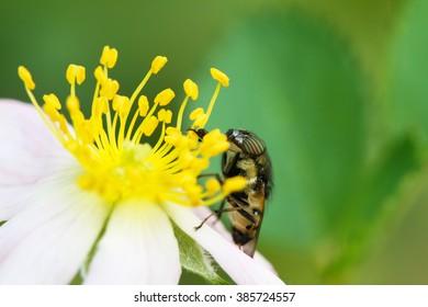 close up bug