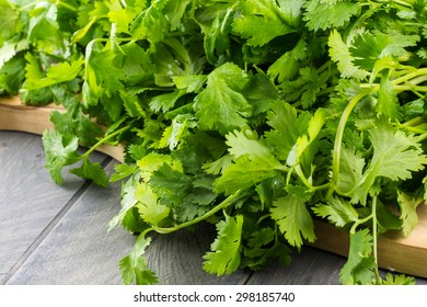 Close up of bunch cilantro leaves.