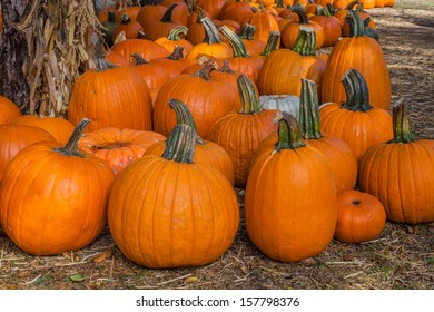 A close up of a bunch of pumpkins on the ground.