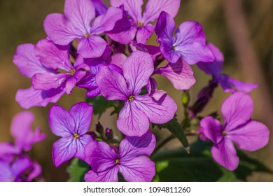 A close up of a bunch of purple flowers