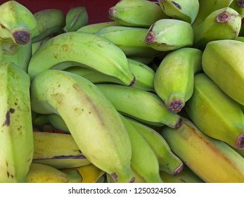 Close up of bunch of ripening bananas
