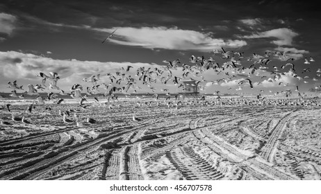 A close up of a bunch of seagulls taking flight on a cold winter day in Huntington Beach, CA, USA.