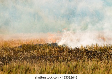 close up burn rice straw with fire and smoke