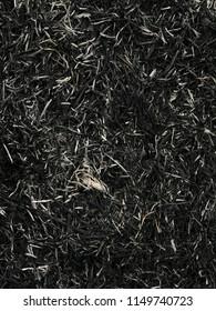 Close up burned hay ash pattern