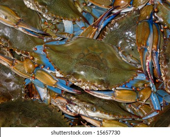 Close up of a bushel of blue crabs stacked for sale.
