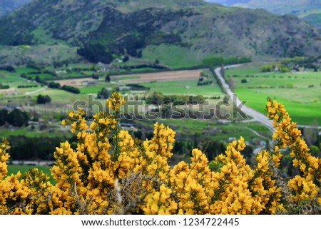 Close Bushes Yellow Flowers Countryside Scene Stock Photo Edit Now