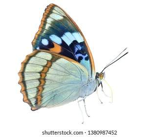 A close up of the butterfly (Apatura schrencki), profile. Isolated on white.