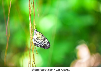 Close up of a butterfly on branch with green background