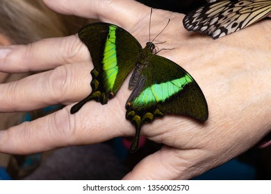 Close up butterfly on woman hand. Beauty of nature.