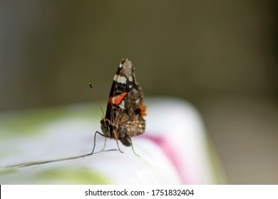 Close up of butterfly standing on table