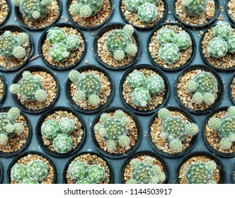 Close up of cactus for background