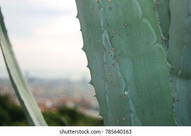 Close up of Cactus edge, overlooking city
