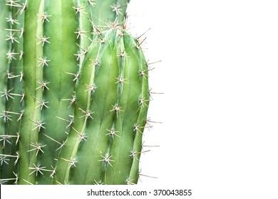 Close up cactus isolated on white background