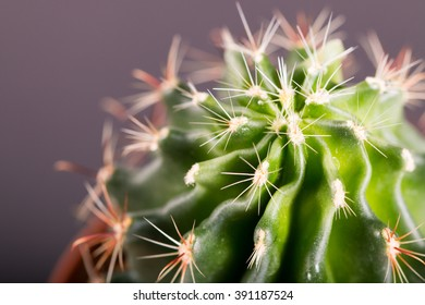 close up of cactus plant and water drops. macro shot with selective focus.