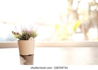 Close up of Cactus in a pot