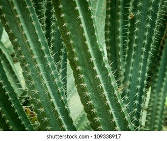 Close up of cactus in vigget style .