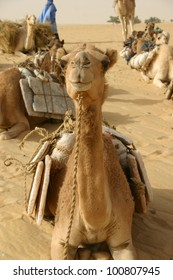 A close up of a camel hauling salt as part of a caravan in the Sahara Desert of Mali, Africa