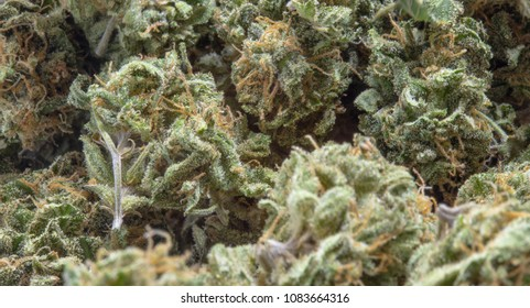 Close up of cannabis buds