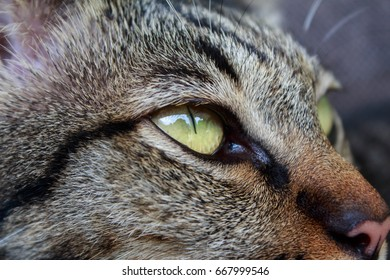 Close up cat eye
