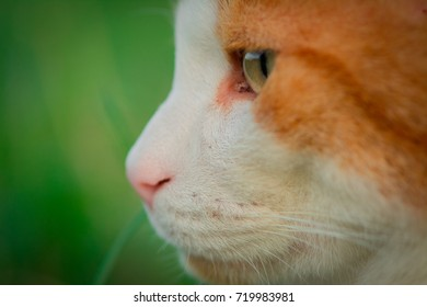 close up of a cat face
