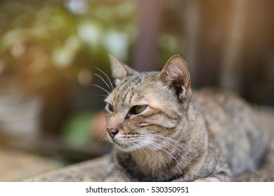 Close up of cat in the garden. Selective focus,light effect.