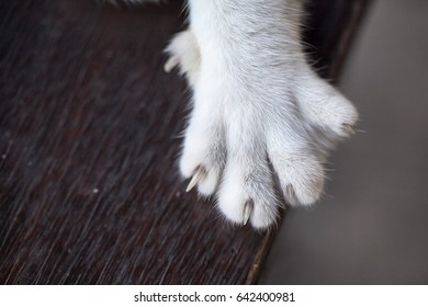 Close up of cat paw