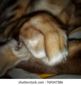 Close Up of a Cat Paw