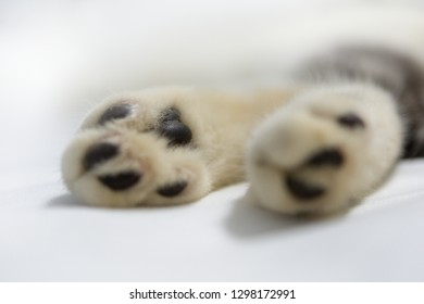 Close up cat paws on white sheet background,selective focus