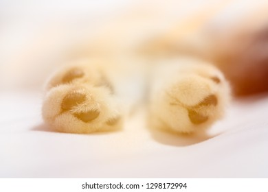 Close up cat paws on white sheet background,selective focus with sun light