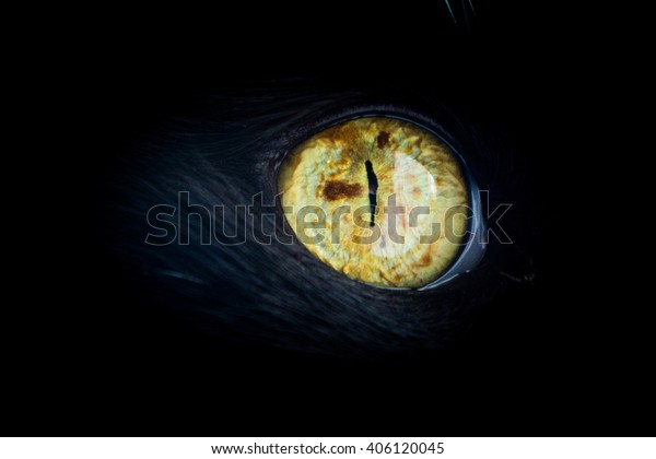 Close up of a cats eye with freckle