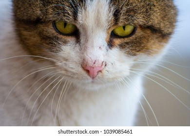 Close up of a cat's head with beautiful yellow eyes