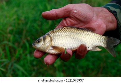 Close up of caught fish in fisherman's hand