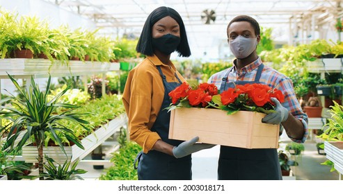 close up of cheerful young African American couple of gardeners standing in floral shop holding in hands box with red pot flower. Selling plants in greenhouse. Gardening work, floristry concept