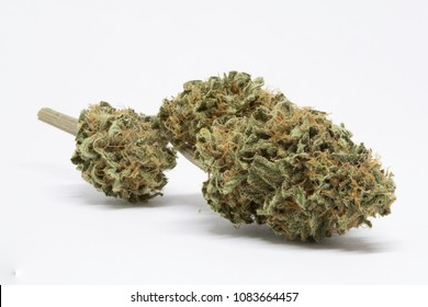 Close up of cheese strain of cannabis on  a stem with white background