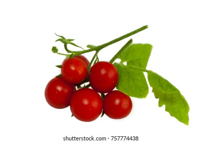 close up of cherry tomatoes of red color, on a branch with green a leaf, on a white background