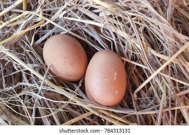 close up chicken eggs on the Straw nest, organic eggs