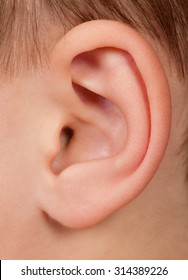 Close up of child ear, little human one ear macro